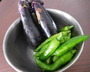 今日の収穫 ナス・シシトウ・サラダカブの芽