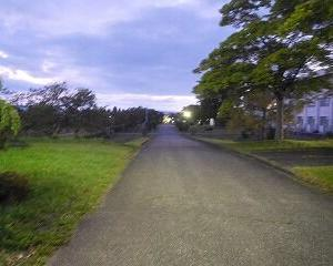 夕方 散歩
