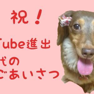保護犬活動に貢献したい。