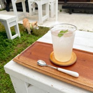 白桃の酵素ジュース始まりました♩
