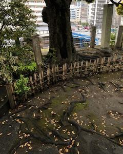 平成の散歩
