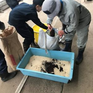 サザコーヒーのコーヒーかすを使った堆肥作り
