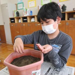 小学部4年 生活科 「植物を育てよう」