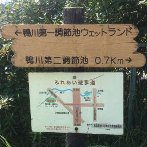 埼玉の鴨川