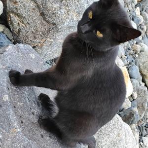 ジェジュ(ガイドの黒猫)<jj_1986_jj IG>191215