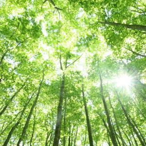 緑輝くブナ林