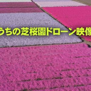うちの芝桜園のドローン映像
