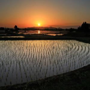 曲がった田んぼの夕景色