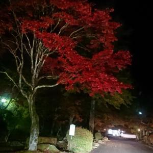 夜の紅葉狩り