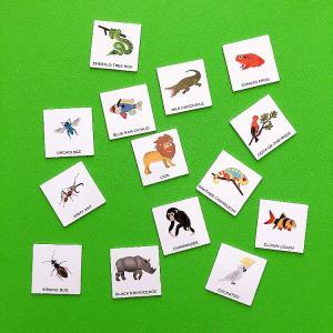 子ども英語、おうち英語【ジャングルの生き物カードで種類に分けてみよう!】