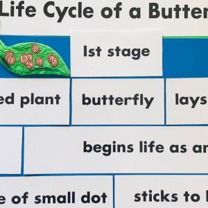 アカデミックな英語で蝶のライフサイクル  IELTSでも、出題【ステージ 1】