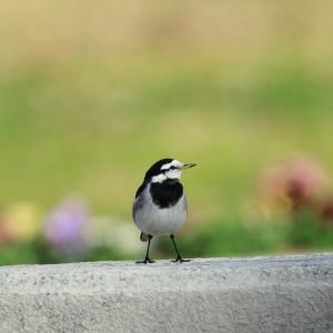 傷ついた鳥