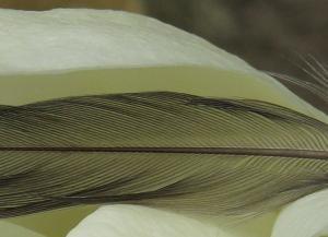 美しい羽根と鳥