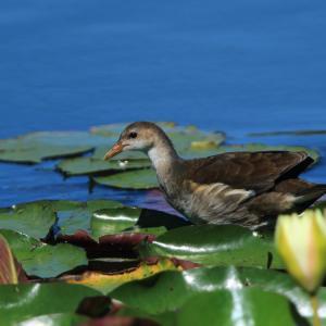 晴れた日の幼鳥と花