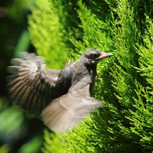 Save the Birds (1)