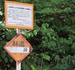 信州中部☆林道物見遊山2020夏(①諏訪湖西岸)