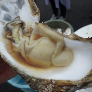 那珂湊おさかな市場で生カキにうにの貝焼