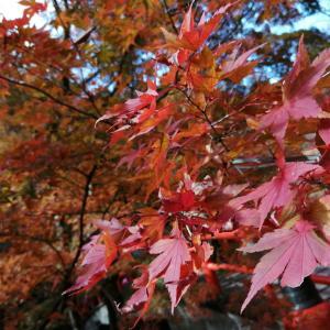 伊香保温泉 河鹿橋の紅葉
