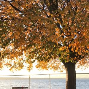 豪華な秋のカボチャとねずみとカエデ