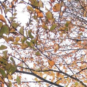 甘い香りの木といえば