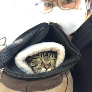 猫病院とお饅頭