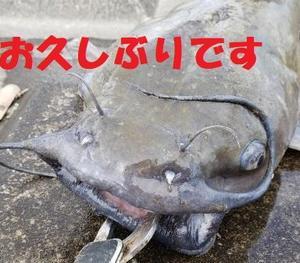 アメリカナマズ釣り★2020