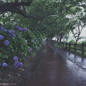 雨の公園散歩・・・