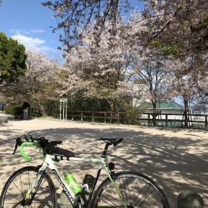 まっさんの男ひとり旅㉖~広島市内「散り桜」巡りショートライド