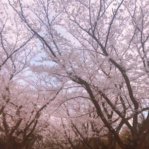 【無料企画】桜のヒーリング