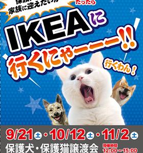 ☆21日(土)イケア港北譲渡会へ☆22日(日)はTNR日本動物福祉病院でも猫の里親会 ★モク君、その後。