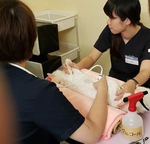 ☆福島9月帰還困難区域救済活動 寒い冬は目前、集中保護活動。ドライフードご支援のお願い。