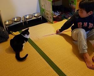 ☆17日(月)、茨城より20匹ほどの猫さんお迎え予定です。ワンちゃんも一頭救えそう。