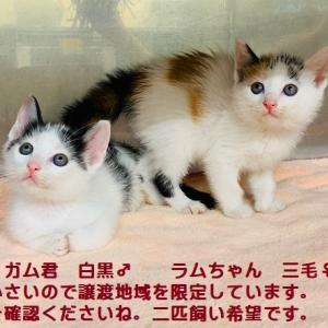 ☆迷子猫情報協力求む!!川崎市多摩区栗谷 ☆6月14日(日)猫の里親会参加申し込み受付中