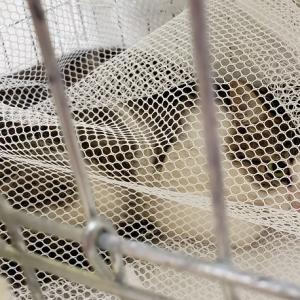 ☆長崎県佐世保市多頭猫救済活動 初回空輸