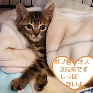 ☆28日(日)猫の里親会 TNR日本動物福祉病院内 宜しくお願い致します。