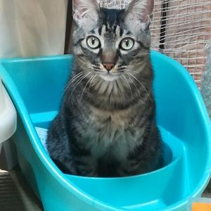★長崎県佐世保市より成猫6匹空輸にて到着しました。☆ペーター君家猫修行4年生 フォスターペアレント様 ありがとう
