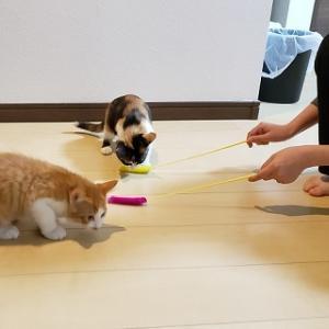 ☆里親様が決まった猫たち、お届け時の写真・小太郎君トライアル中