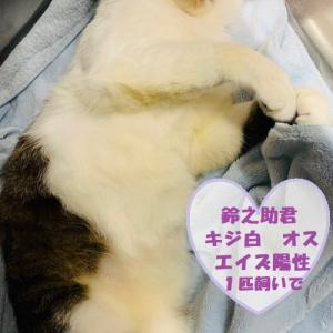 ☆鈴之助(茨城県動物指導センター引取りフォスターペアレント様 ありがとう