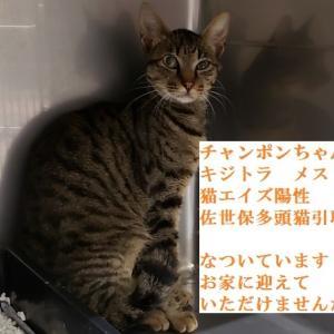 ☆長崎県佐世保市多頭猫救済活動 引取り猫の殆どが猫エイズ陽性
