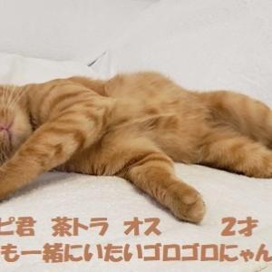 ☆「こねこの山」11月18日(日)里親会参加猫さん一部ご紹介