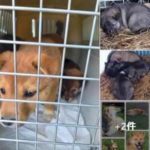 ☆北海道・浜中町・厚岸町で犬達の保護をしてくださっている 特定非営利活動法人 ドッグレスキューしおんの会 様からのお知らせです