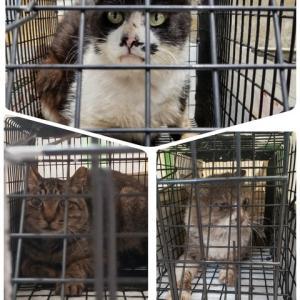 ★拡散で応援してね!!。『幸 アニマルサポートサポート』さん 川崎・横浜中心に、毎月、数十匹もの野良猫不妊手術