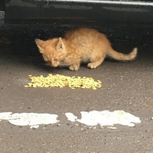 ☆JFEスチール 手が届かないところにいる猫たち   JFEホールディングス様 一日も早いご決断を!   私たちは、協力を惜しみません。 ☆『幸 アニマルサポートサポート』さん、動物愛護週間に川崎市より表彰