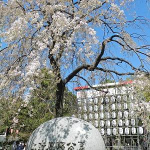 上野の桜(^-^)