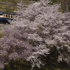 鳥居川の桜並木とスカ色 三題