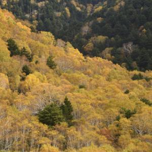 志賀高原・大沼池付近の紅葉