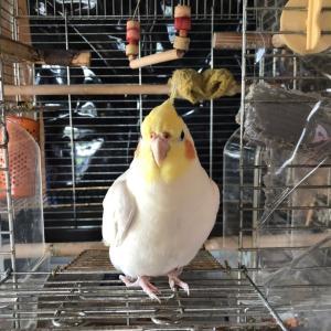 これで放鳥?