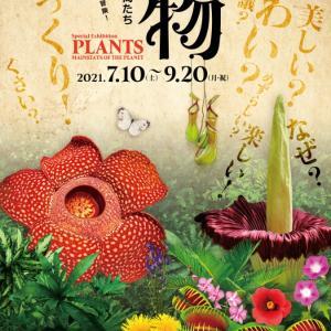 特別展(植物 地球を支える仲間たち) 開催のご案内 が送られてきました➰