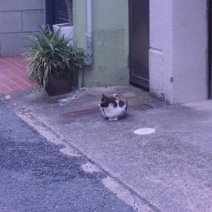 店の周りの猫