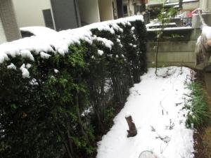 予想外の積雪